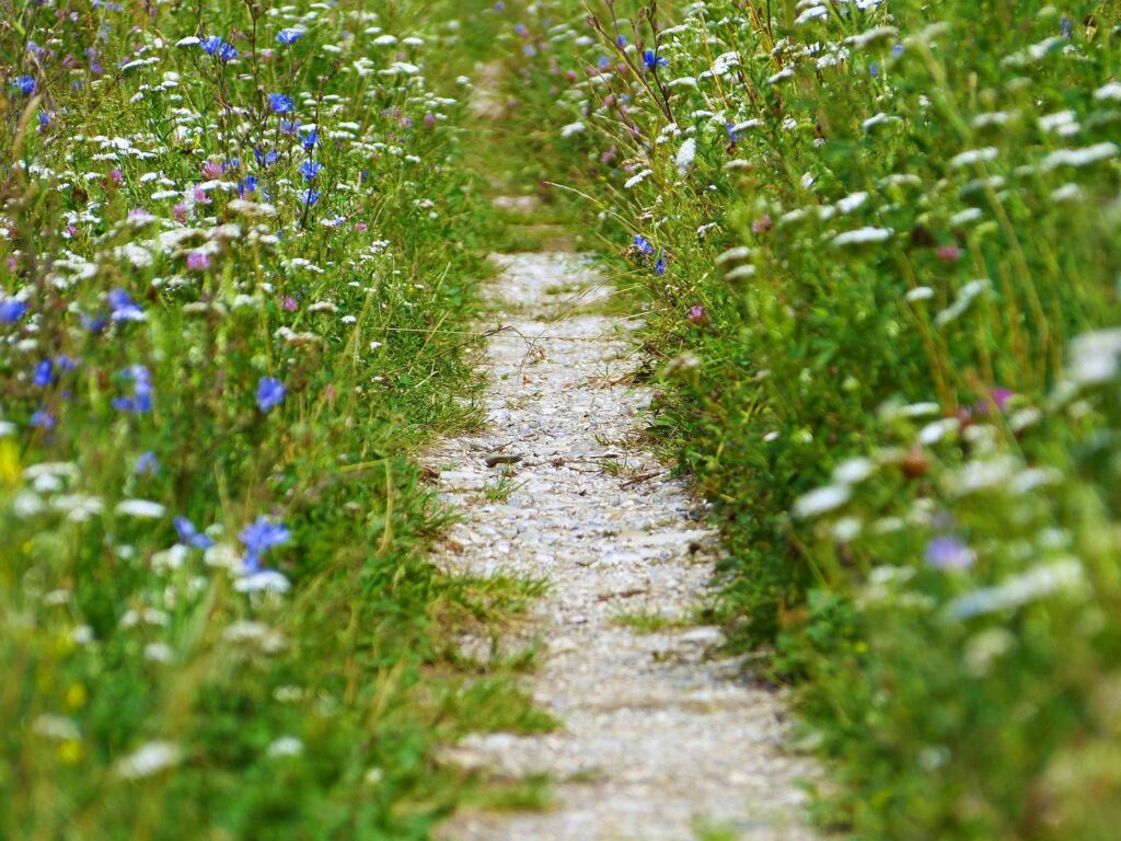 Weg durch Kräuterwiese